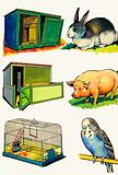 Pets and Their Homes: Rabbit, Pig and Budgerigar