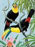 Toucans, birds of Central and South America