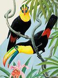 Big-beaked Birds