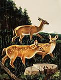 Deer in a Forest Clearing