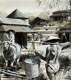 Chinese paddy fields
