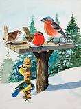 Birds on a bird table
