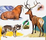 W is for walrus, wagtail, wasp, wapiti and wolf