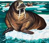 Wonders of Nature: Why Laugh at the Walrus?