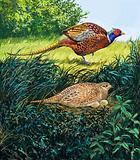Pheasants Nest