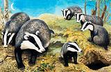 Nature Wonderland: Badgers