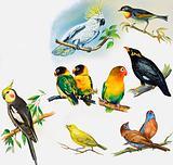 All Sorts of Pet Birds