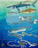 Underwater creatures montage