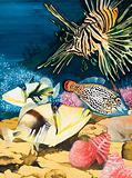 Nature's Kingdom: An Underwater World of Wonder