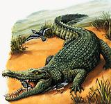 The very best of friends: the Nile crocodile and Egyptian plover
