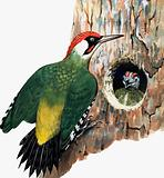 Woodpecker and chick