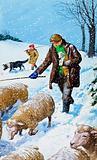 Farmers bringing in their sheep