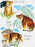 Cubs of Big Cats