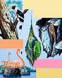 Birds montage