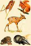Countryside animals montage