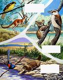 Australian animals montage