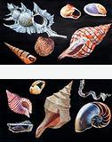 All Sorts of Sea Shells