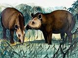 The Tapir
