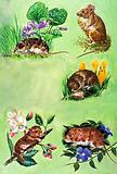 Mice, voles and shrews