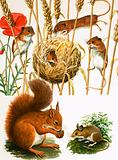 Field mice and nest, squirrel and long-tailed mouse