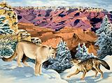 Puma and Coyote meet at the Grand Canyon National Park