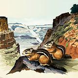 Chipmunks at the Grand Canyon National Park