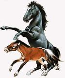 The merychippus (below) is the ancient ancestor of the modern day stallion