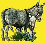 Donkey and donkey foal