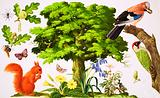 The Wonderful Oak Tree