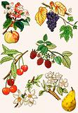 Unidentified montage of fruit and berries