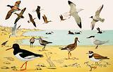 Unidentified seabirds montage