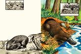Wombat and Platypus