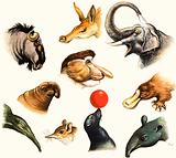 Unidentified montage of animal noses