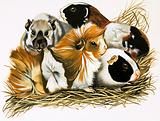 All Sorts of Guinea Pigs