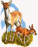 Deer and foal