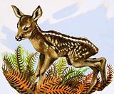 The Roe Deer foal