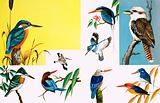 All sorts of Kingfishers