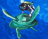 Turtle with diver