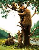 Brown Bear climbing tree attracted by honey