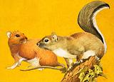 Brown Rat and Grey Squirrel