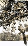 Hornbill and monkeys