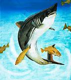 The Porbeagle, a type of shark