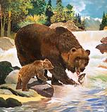 The Brown Bear (or Kodiak Bear)