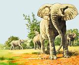 Nature Wonderland: Elephants of Africa