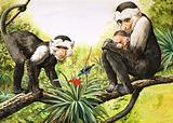 Nature Wonderland: Capuchin Monkeys