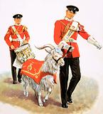 An army mascot goat