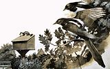 Magpies watching a stoat atop a bird house