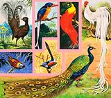 Unidentified birds of paradise