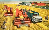 Combine harvesters harvest wheat on the vast plains of Canada