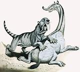 Sabre-toothed tiger attacking unidentified prehistoric creature